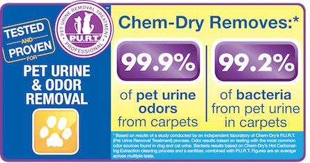 Professional Pet Urine and Odor Removal Treatment by Chem-Dry of Tampa
